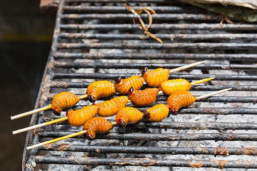 Beetle「Ecuador, Puerto Francisco de Orellana, grilled larva of trunk beetle」:スマホ壁紙(17)