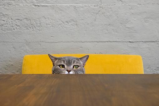 Sports Target「curious cat」:スマホ壁紙(13)