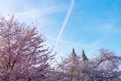 花「Airplanes make vapor trails in the evening sky, which appear over the Cherry blossoms trees in Central Park New York. The San Remo Twin Tower can be seen behind Cherry blossoms trees at Central Park West Historic District in behind.」:スマホ壁紙(19)