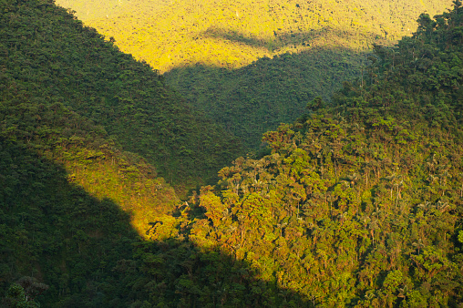 Montane Rainforest「Sunrise on Apu Kanaqhuai, Manu National Park, Peru」:スマホ壁紙(6)