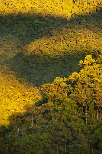 Montane Rainforest「Sunrise on Apu Kanaqhuai, Manu National Park, Peru」:スマホ壁紙(5)