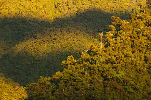 Montane Rainforest「Sunrise on Apu Kanaqhuai, Manu National Park, Peru」:スマホ壁紙(7)