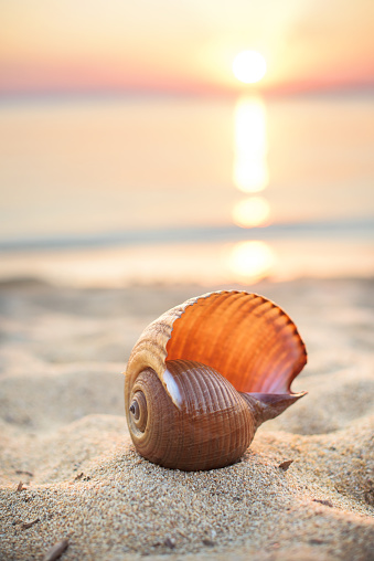 貝殻「Sea shell on beach at sunset」:スマホ壁紙(13)