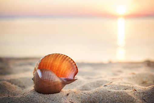 shell「Sea shell on beach at sunset」:スマホ壁紙(3)