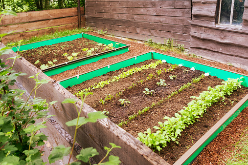Planting「Garden with mixed vegetable patch and slug fence」:スマホ壁紙(10)