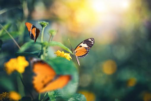 Nature「Garden With Butterflies」:スマホ壁紙(19)