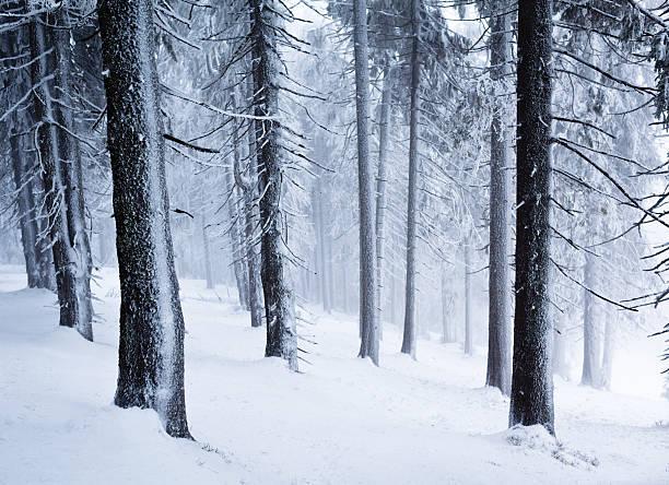 Winter in wood:スマホ壁紙(壁紙.com)