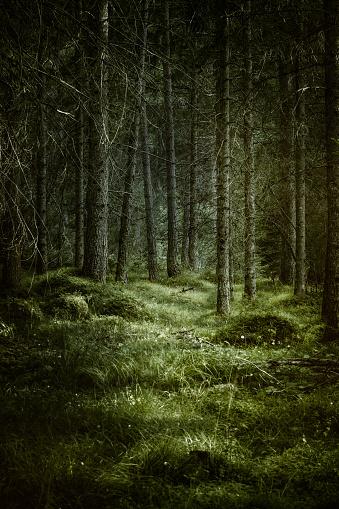 Woodland「Dark misty forest」:スマホ壁紙(18)