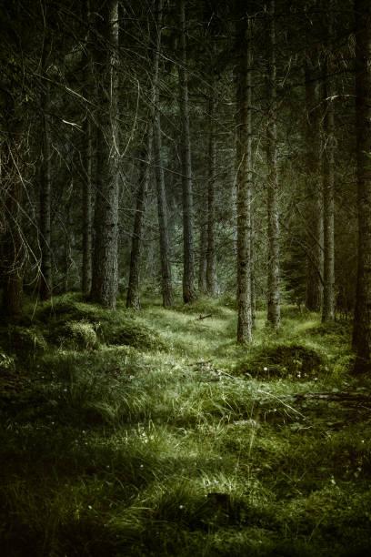 Dark misty forest:スマホ壁紙(壁紙.com)
