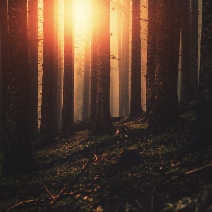 Spirituality「Dark Misty forest at sunset」:スマホ壁紙(11)