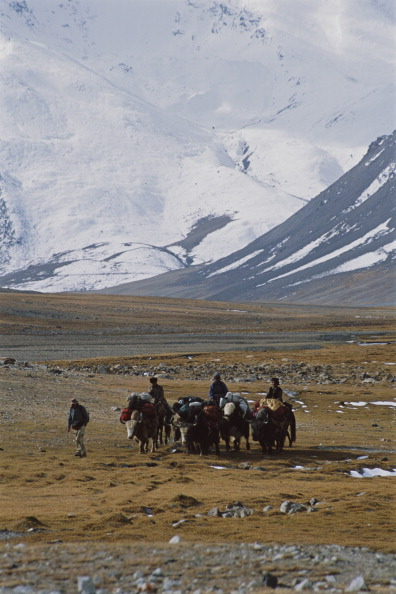 Wild Cattle「Schaller Expedition」:写真・画像(19)[壁紙.com]