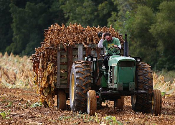 Tractor「Maryland Tobacco Farm Begins Harvest」:写真・画像(5)[壁紙.com]