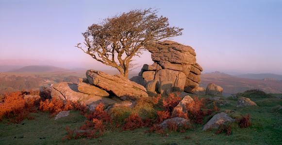 Single Tree「Saddle Tor at dawn, Dartmoor, Devon」:スマホ壁紙(7)