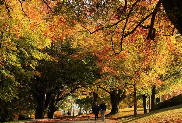 秋「Spectacular Autumn Colours Are Seen After Mild Temperatures Over The Last Two Months」:写真・画像(12)[壁紙.com]