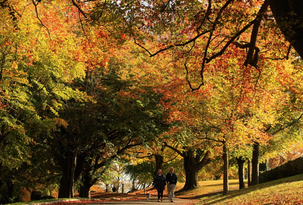 秋「Spectacular Autumn Colours Are Seen After Mild Temperatures Over The Last Two Months」:写真・画像(8)[壁紙.com]