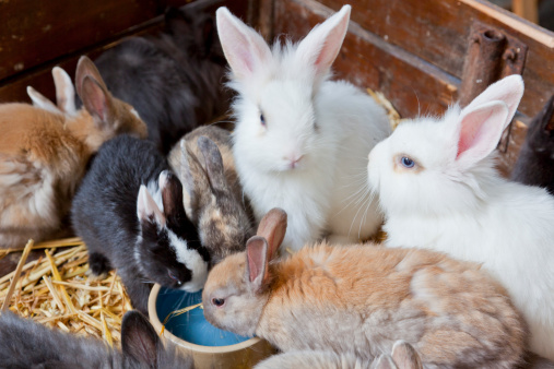 Baby Rabbit「Cute pet rabbits, Paris, France」:スマホ壁紙(1)