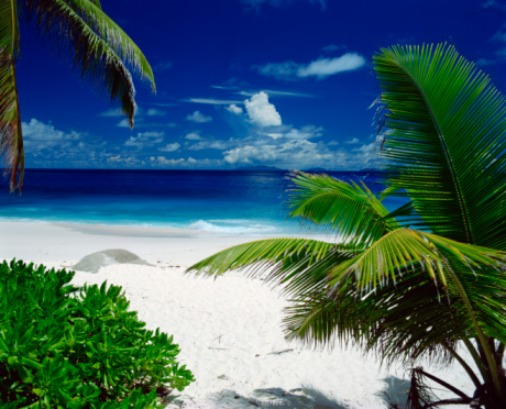 Palm tree「Beach with palm trees, Seychelles」:スマホ壁紙(3)