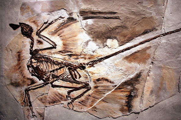 Ancient「Exhibit Displays Newest Dinosaur Fossils」:写真・画像(4)[壁紙.com]