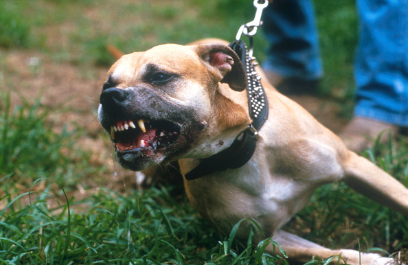 Aggression「Dogs and Their Owners」:写真・画像(4)[壁紙.com]