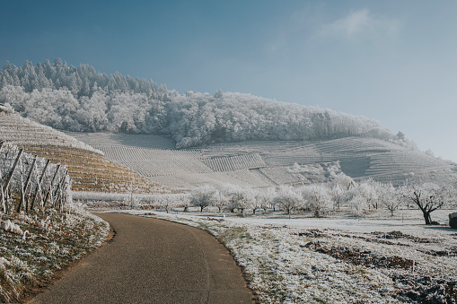 霜「Germany, Ortenberg, vineyards in winter」:スマホ壁紙(18)