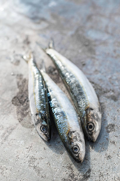 Raw sardine fishes:スマホ壁紙(壁紙.com)