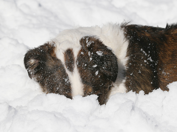 2016 Winter Storm Jonas「Dogs Enjoying Winter Storm Jonas」:写真・画像(0)[壁紙.com]