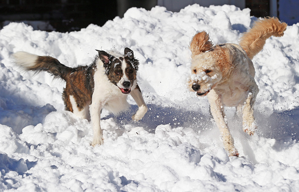 2016 Winter Storm Jonas「Dogs Enjoying Winter Storm Jonas」:写真・画像(14)[壁紙.com]