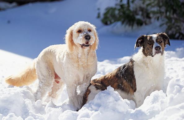 2016 Winter Storm Jonas「Dogs Enjoying Winter Storm Jonas」:写真・画像(6)[壁紙.com]