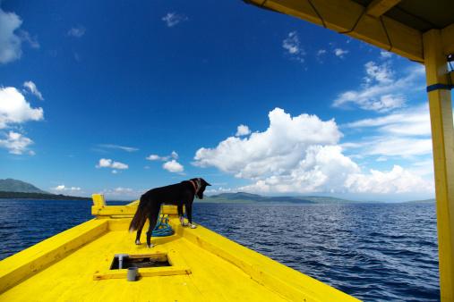 February「Dog on Boat」:スマホ壁紙(1)