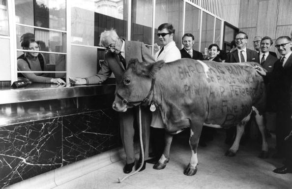 Humor「Cow Trade」:写真・画像(13)[壁紙.com]