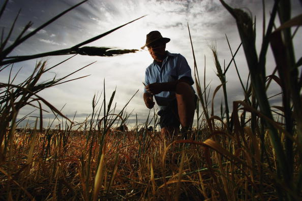 Crop - Plant「Australia Endures The Worst Drought On Record」:写真・画像(19)[壁紙.com]