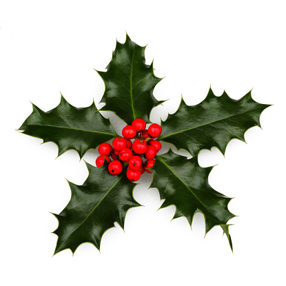 Rowanberry「Holly decoration on white in square format」:スマホ壁紙(17)