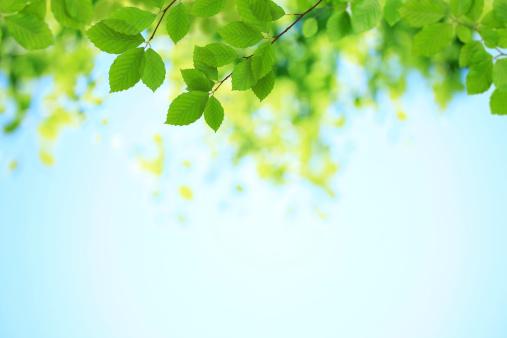 Leaf「新鮮な緑の葉」:スマホ壁紙(5)