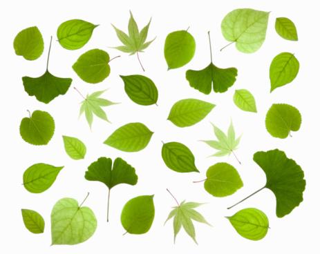 Digital Composite「Fresh green leaves」:スマホ壁紙(8)