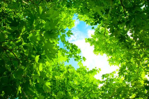 春「新鮮な緑の葉」:スマホ壁紙(19)