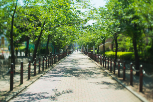 公園「A fresh green street lined with trees」:スマホ壁紙(18)