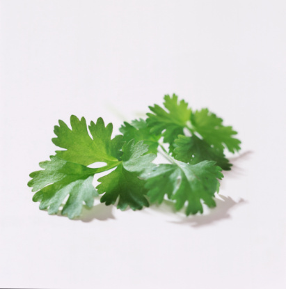 Cilantro「fresh  green coriander and parsley」:スマホ壁紙(5)
