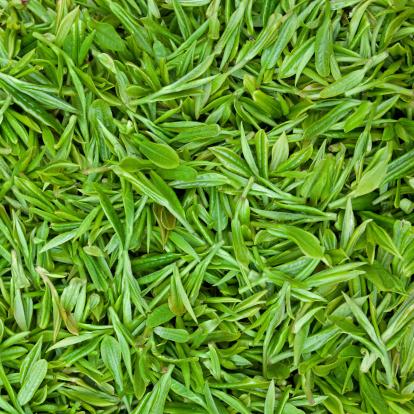 Dried Tea Leaves「Fresh green tea leaves background」:スマホ壁紙(11)