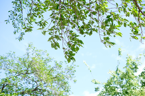 Low Angle View「Fresh green and blue sky」:スマホ壁紙(14)
