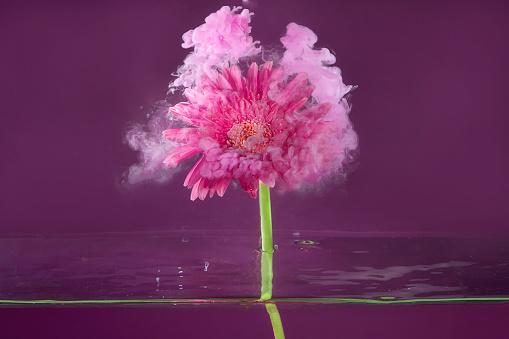 花頭「Pink gerbera flower in water with acrylic paint」:スマホ壁紙(17)