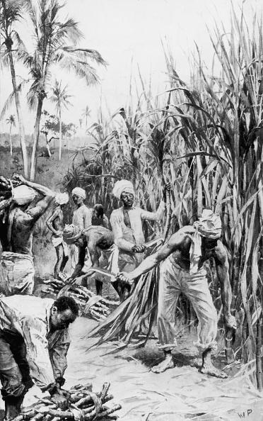 Sugar Cane「Cane Cutters」:写真・画像(9)[壁紙.com]