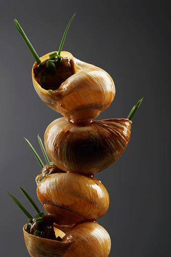 snails「Escargot」:スマホ壁紙(17)