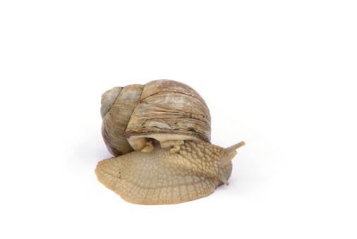 snails「escargot」:スマホ壁紙(10)