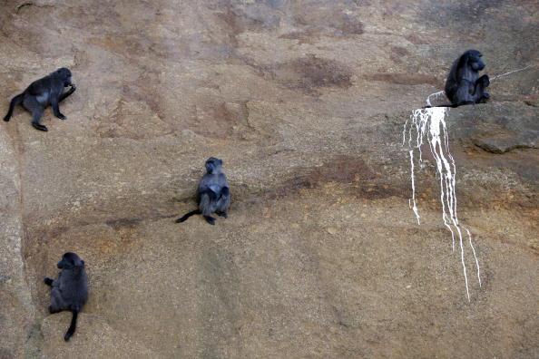 クライミング「Rogue Baboons Become Menace In South Africa」:写真・画像(16)[壁紙.com]
