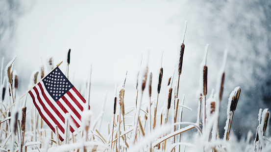 Annual Event「Winter still life with American flag amongst frozen cattails」:スマホ壁紙(17)
