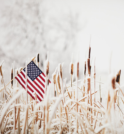 Annual Event「Winter still life with American flag amongst frozen cattails」:スマホ壁紙(2)
