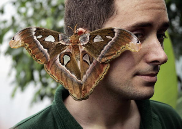 Ear「Tropical Butterflies At London Zoo」:写真・画像(11)[壁紙.com]