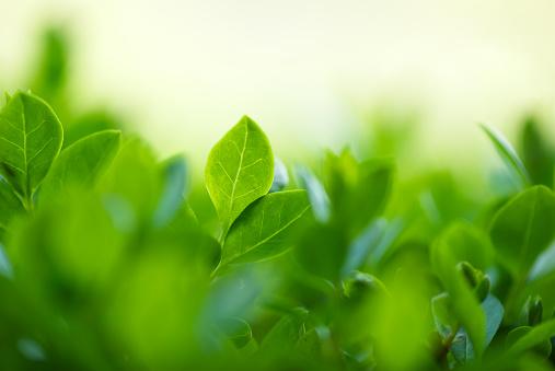Defocused「Spring leaves」:スマホ壁紙(3)