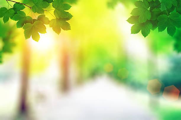 Spring Leaves At Sunset:スマホ壁紙(壁紙.com)