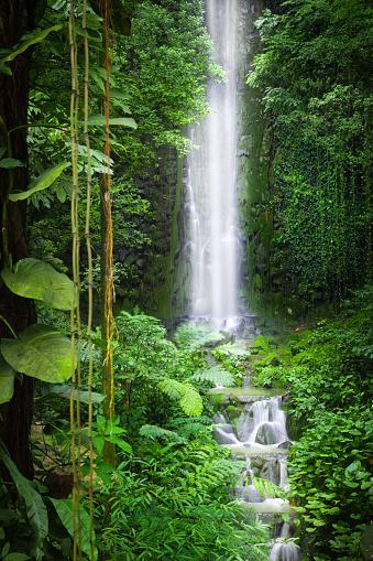 アマゾン熱帯雨林「ジャングルの滝」:スマホ壁紙(1)